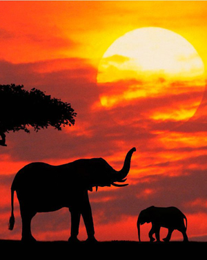 Temaaften / Afrikansk Kunst