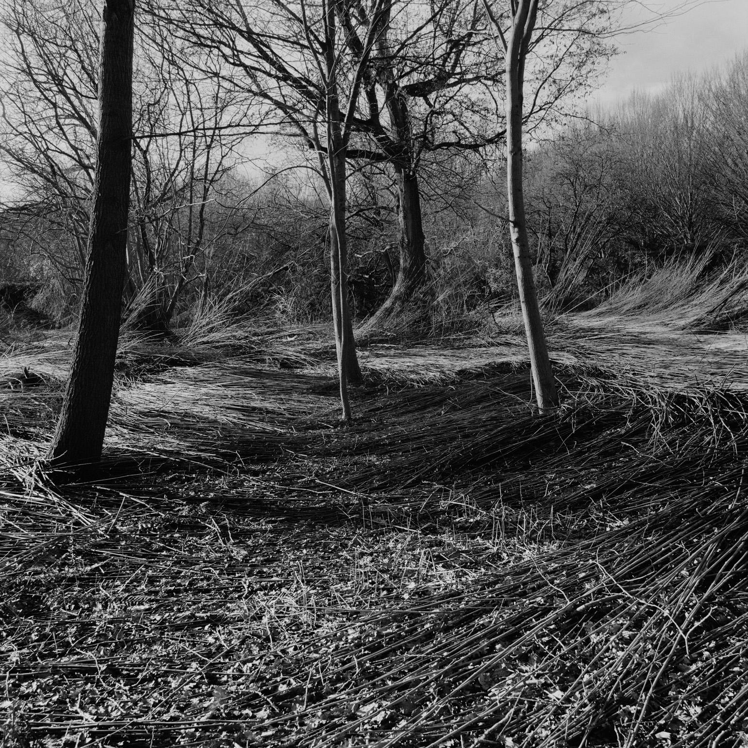 Grounds I
